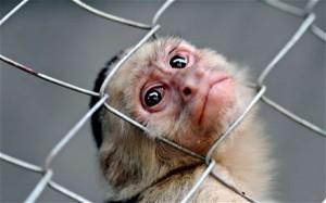 monkey_1958030c